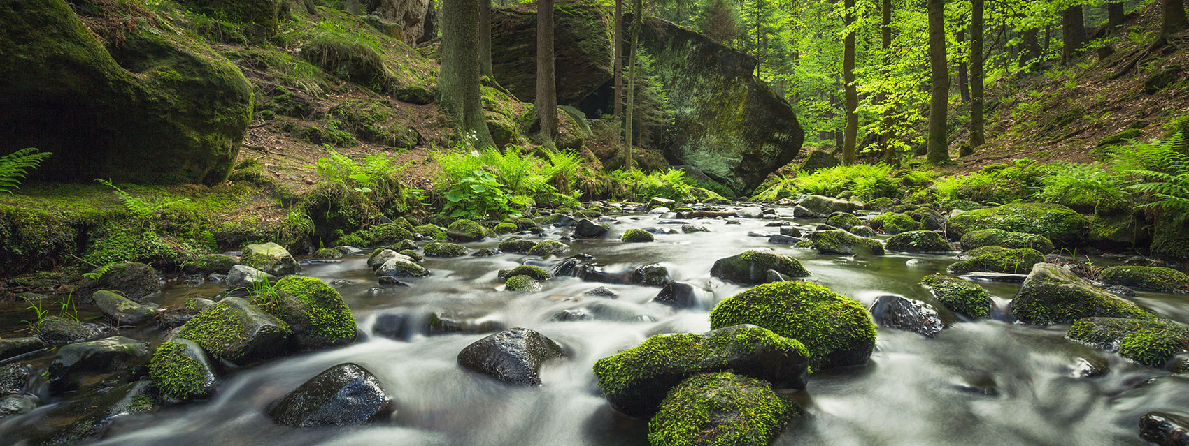 Water flowing quickly over moss covered rocks in a forest